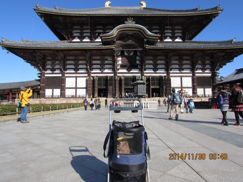 奈良公園 東大寺 春日大社
