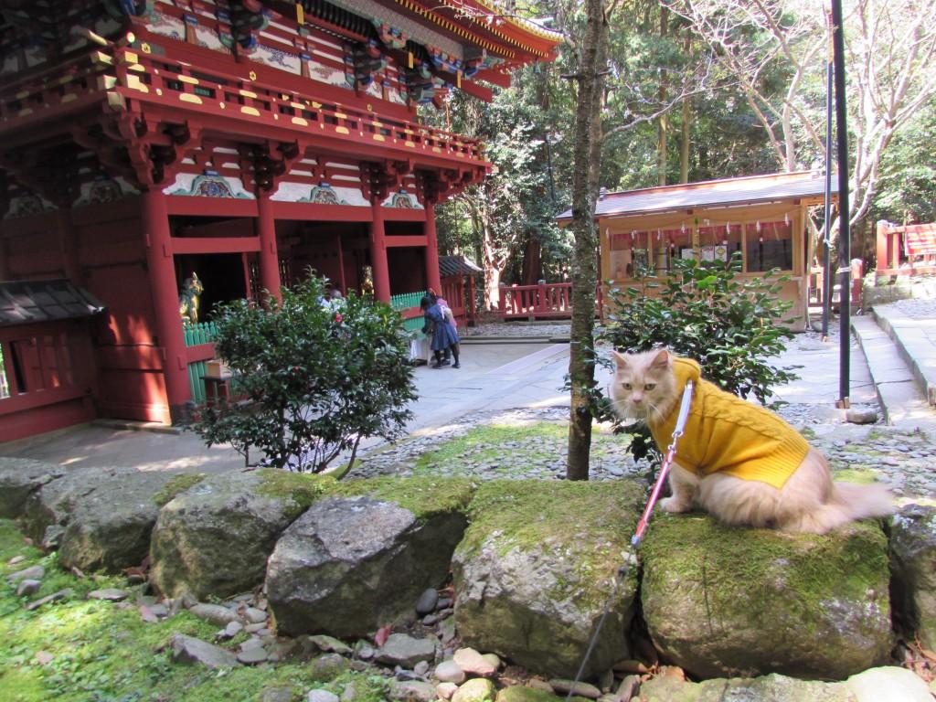 桜満開の日本平 久能山東照宮